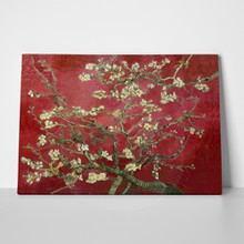 Almond blossom red