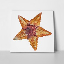 Watercolor starfish 1104996509 a