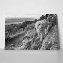 Labradoodle doing trail up 362819834 a