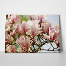 Pink magnolia flower 187229606 a