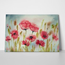 Beautiful red poppy flowers watercolor painting 667140106 a