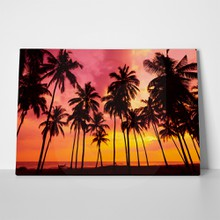 Tropical sunset 434156923 a