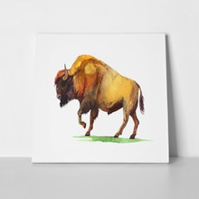 Buffalo hand painted illustration 327468041 a