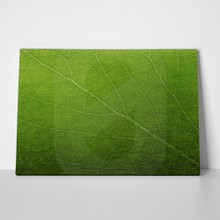 Abstract green leaf texture 110490692 a
