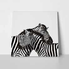 Zebra couple drawing 1029973399 a