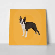 Dog boston terrier in yellow 517663528 a