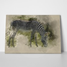 Watercolor painting beautiful zebra 727434727 a