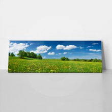 Field with dandelions 195545630 a