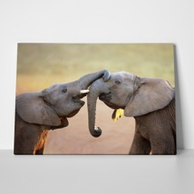 Elephants kiss