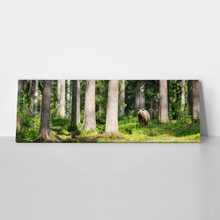 Brown bear in forest panorama