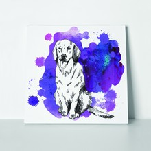 Labrador retriever dog in purple color 527381134 a