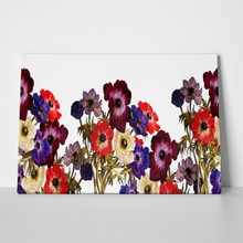 Multicolored anemones flowers 543152746 a