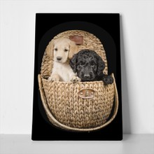 Labradoodles in wicker basket 583631695 a