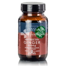 Terranova Ginger 350mg - Πέψη / Ναυτία, 50caps