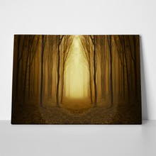Path through golden forest 74587858 a