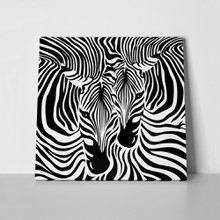 Zebra couple background 579949141 a