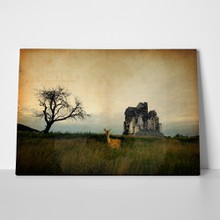 Church ruin deer 80844724 a
