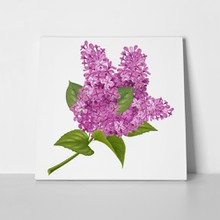 Spring purple lilacs 583630303 a