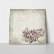 Textured old paper background scabiosa flower 155173397 a