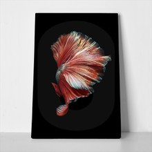 Betta fish art movement 671039209 a