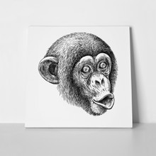 Cute monkey illustration 771329761 a